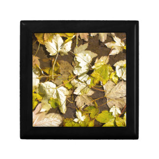 Top view of a wet autumn maple leaves gift box