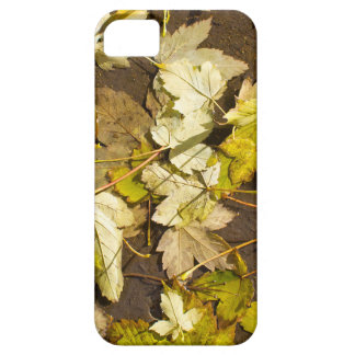 Top view of a wet autumn maple leaves iPhone 5 case