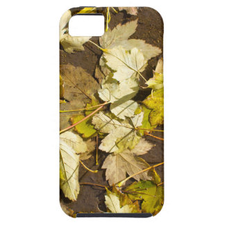Top view of a wet autumn maple leaves iPhone 5 cases