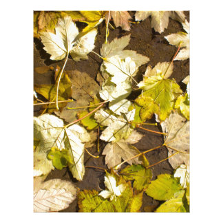 Top view of a wet autumn maple leaves letterhead