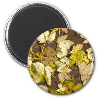 Top view of a wet autumn maple leaves magnet