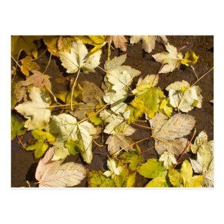 Top view of a wet autumn maple leaves postcard