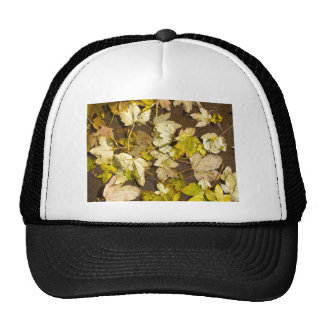 Top view of a wet autumn maple leaves trucker hat