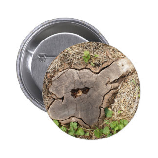 Top view of an old stump of cut tree cracked 2 inch round button