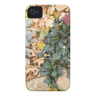Top view of the autumn flowerbed iPhone 4 Case-Mate case