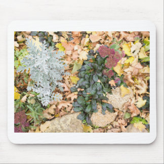 Top view of the autumn flowerbed mouse pad