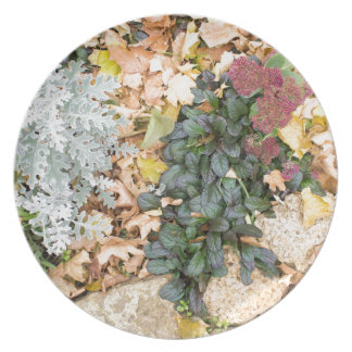 Top view of the autumn flowerbed plate