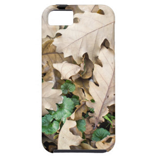 Top view of the fallen oak leaves iPhone 5 case