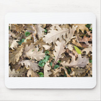 Top view of the fallen oak leaves mouse pad