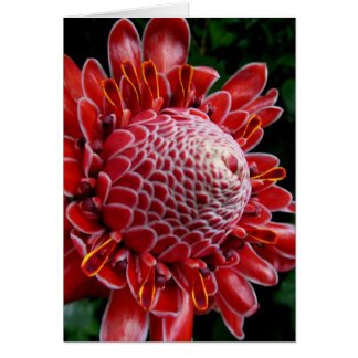 Torch Ginger Card