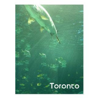 Toronto Aquarium Postcard