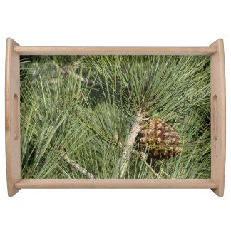 Torrey Pine Closeup California Tree Serving Tray