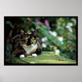 Tortie Cat on Garden Bench Poster