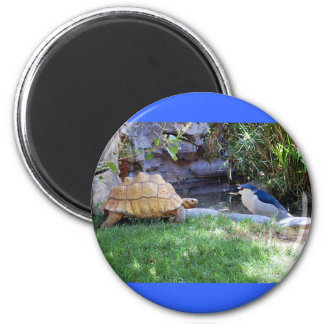 Tortoise and Blue Jay Friends Magnet