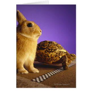 Tortoise and the hare card