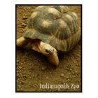 Tortoise at Indianapolis Zoo Postcard