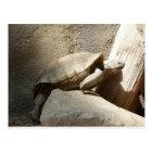 tortoise climbing postcard