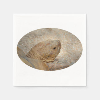 tortoise head close up old turtle paper napkin