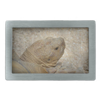 tortoise head close up old turtle rectangular belt buckle