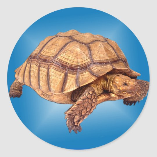Tortoise on Blue Classic Round Sticker