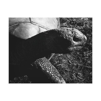 Tortoise Photograph in Black and White Canvas Print