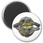 Tortoise Round Magnet
