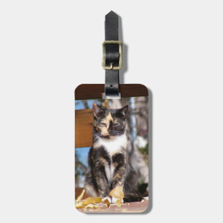 Tortoise Shell Kitten 1 Luggage Tag