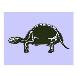 tortoise skeleton postcard