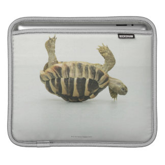 Tortoise upside down, balancing on shell sleeves for iPads
