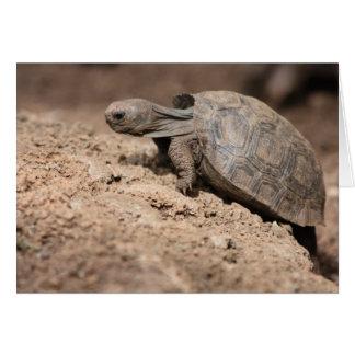Tortoise's Challenge Card