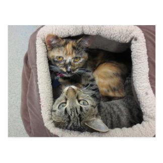 Tortoiseshell & Tabby Cats Postcard