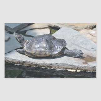 tortue de détente autocollants rectangulaires