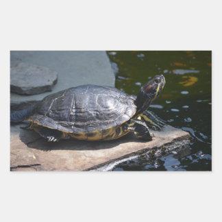 tortue stickers rectangulaires