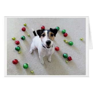 Tossed Ornaments Jack Russell Terrier card