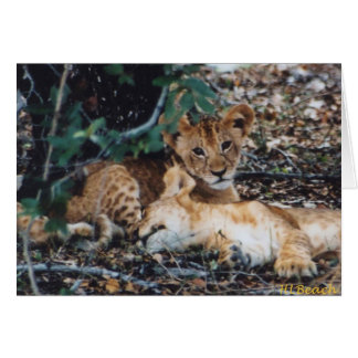 Toto Simbas (Baby Lions) Card