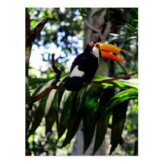 Toucan 3 postcard
