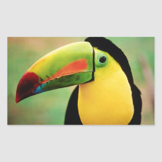 Toucan Bird Wild Nature Colorful Photography Sticker