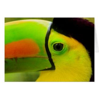 Toucan face close up, Belize Card