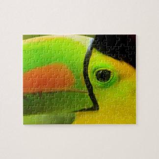 Toucan face close up, Belize Jigsaw Puzzle