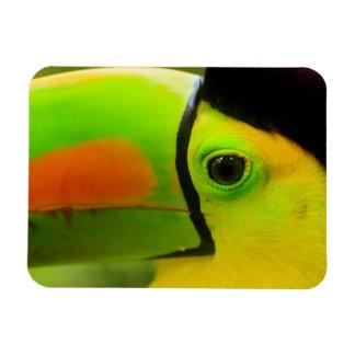 Toucan face close up, Belize Rectangular Photo Magnet