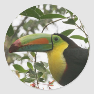 Toucan in the Jungle Classic Round Sticker