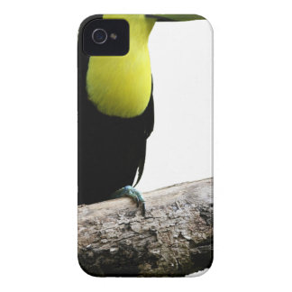 Toucan On A Tree iPhone 4 Covers