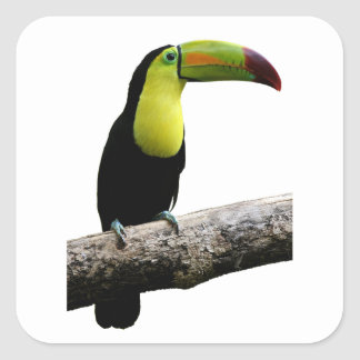 Toucan On A Tree Square Sticker