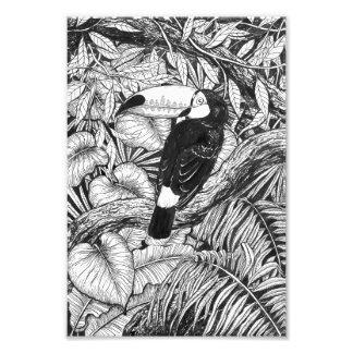 Toucan tropical garden photo print