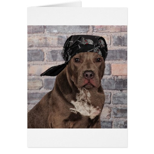 Tough Pitty Greeting Cards
