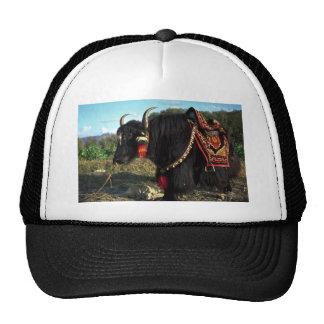 Tourist yak, Tibet Trucker Hat