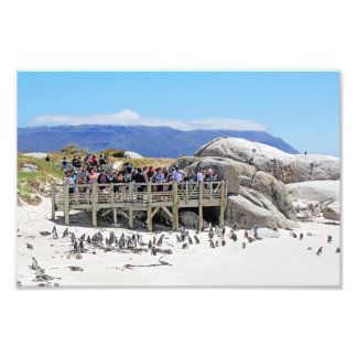 Tourists at Boulders Beach looking at penguins Photograph