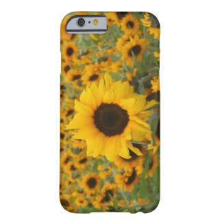 Tournesols Coque iPhone 6 Barely There