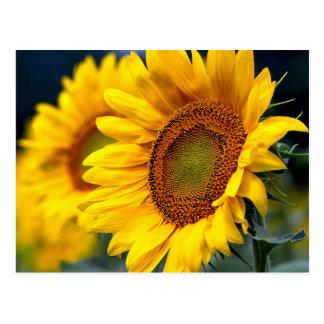 Tournesols jaunes floraux - bonjour, amour, Merci Carte Postale