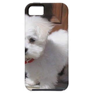 Toy Dogs Case For The iPhone 5